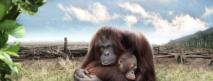 WWF - Referenzen TOMBECK Zauberkünstler